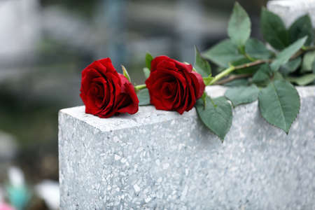 Red roses on light grey tombstone outdoors. Funeral ceremony