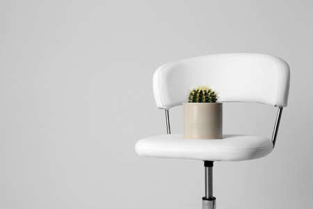 Chair with cactus isolated on white. Hemorrhoids concept