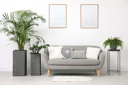 Beautiful potted plants in modern living room