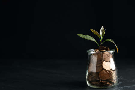 Glass jar with coins and green plant on black table, space for text Stockfoto
