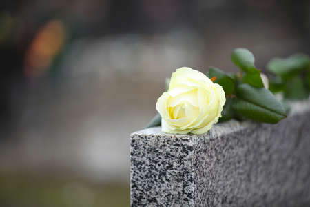 White rose on grey granite tombstone outdoors, space for text. Funeral ceremony 스톡 콘텐츠