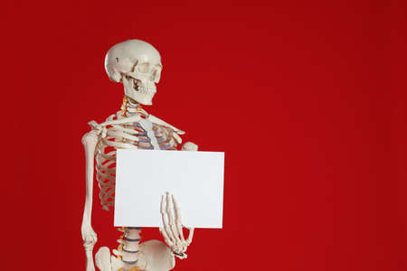 Artificial human skeleton model with blank paper sheet on red background. Space for text