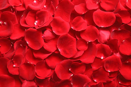 Fresh red rose petals as background, top view Imagens