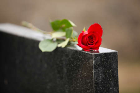 Red rose on black granite tombstone outdoors. Funeral ceremony