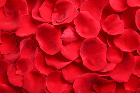 Fresh red rose petals as background, top view Banque d'images
