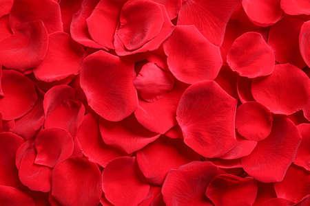 Verse rode rozenblaadjes als achtergrond, bovenaanzicht Stockfoto