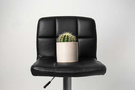 Chair with cactus on white background. Hemorrhoids concept 스톡 콘텐츠
