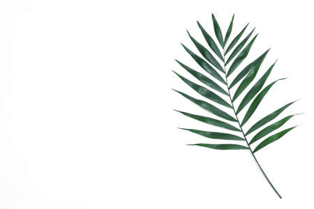 Beautiful lush tropical leaf on white background, top view
