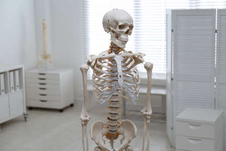 Human skeleton model in modern orthopedist's office