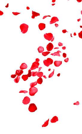 Petali di rosa rossa fresca volanti su sfondo bianco