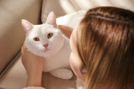 Young woman with her beautiful white cat at home, closeup. Fluffy pet 스톡 콘텐츠