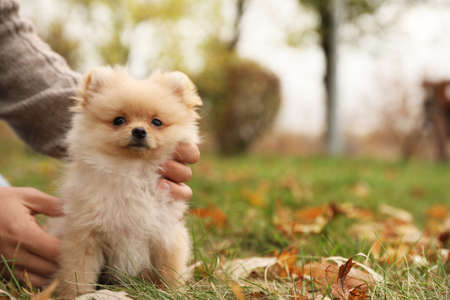 Man with small fluffy dog in autumn park, closeup