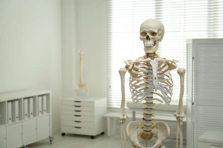Human skeleton model in orthopedist's office. Space for text