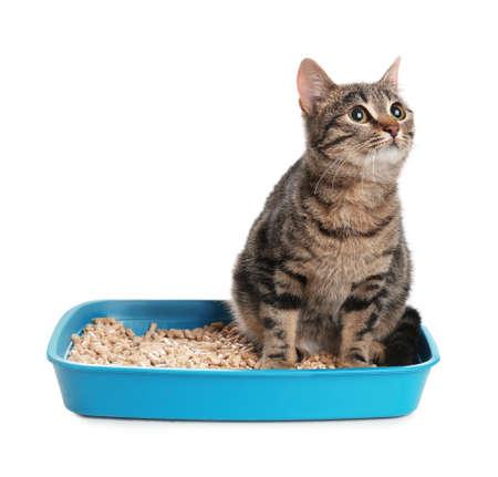 Tabby-Katze im Katzenklo auf weißem Hintergrund Standard-Bild
