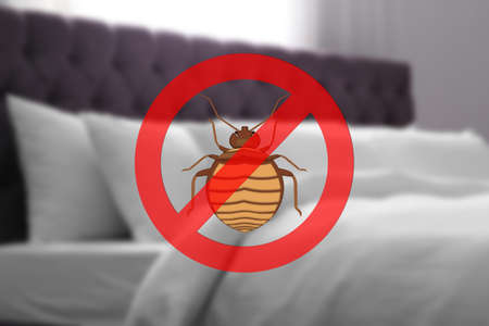 Clean mattress and pillows without bed bugs in room