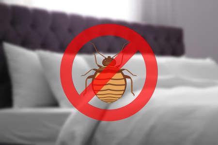 Saubere Matratze und Kissen ohne Bettwanzen im Zimmer