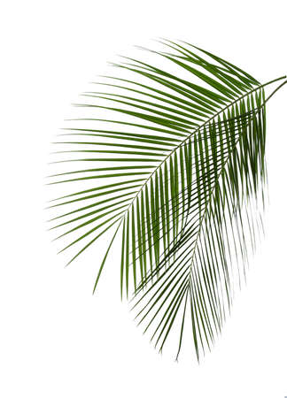Beautiful lush tropical leaves isolated on white