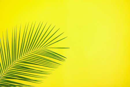 Beautiful lush tropical leaf on yellow background. Space for text