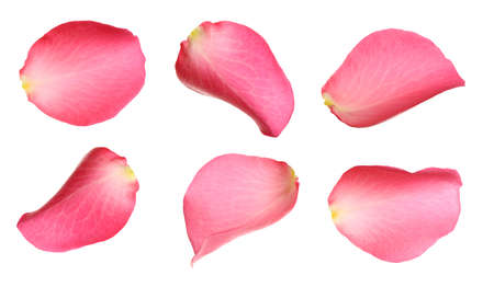 Fresh pink rose petals on white background