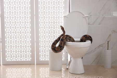 Brown boa constrictor on toilet bowl in bathroom