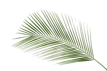 Beautiful lush tropical leaf isolated on white