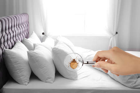 Woman with magnifying glass detecting bed bug, closeup Standard-Bild
