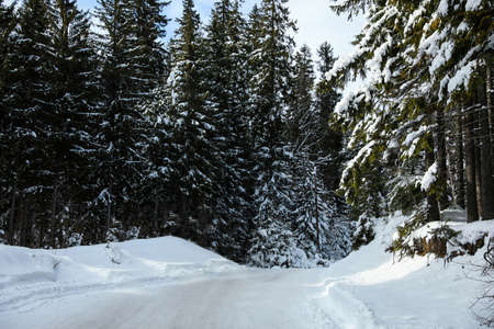 Empty road covered with snow in winter forest
