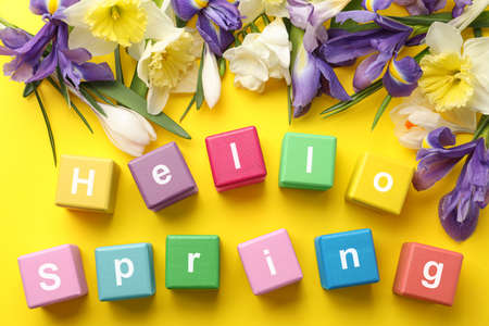 Colorful cubes with words HELLO SPRING and fresh flowers on yellow background, flat lay