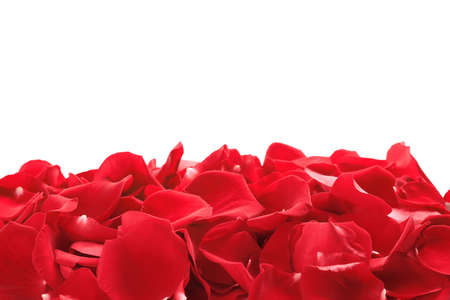 Pile of red rose petals on white background