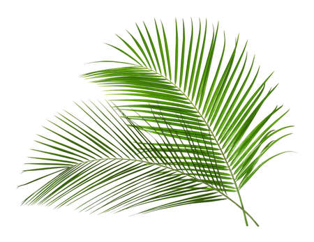 Beautiful lush tropical leaves isolated on white Stock fotó