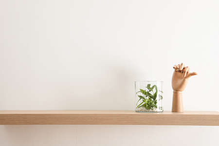 Wooden shelf with beautiful plant and mannequin hand on light wall