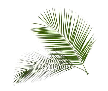 Belles feuilles tropicales luxuriantes isolées sur blanc Banque d'images