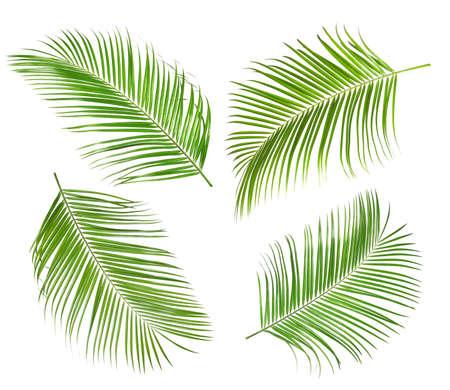 Set of tropical leaves on white background Zdjęcie Seryjne