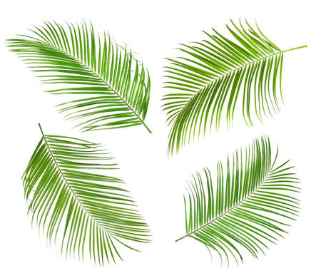 Set of tropical leaves on white background Archivio Fotografico