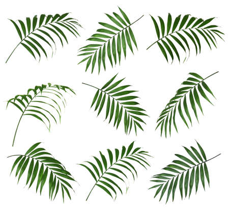 Set of tropical leaves on white background