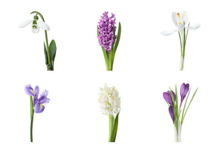 Collage with beautiful spring flowers on white background.