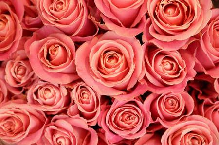背景、トップビューとして美しいピンクのバラ。フローラルの装飾