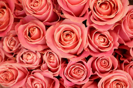 Beautiful pink roses as background, top view. Floral decor