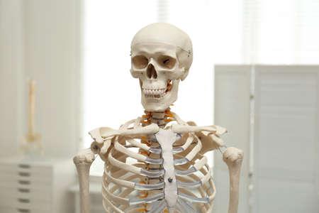 Human skeleton model in modern orthopedist's office