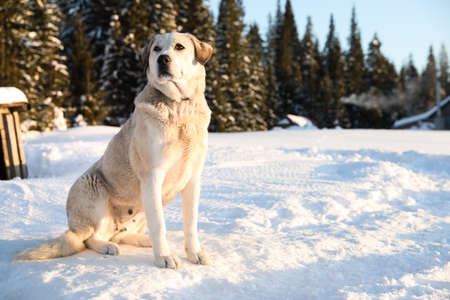 Cute dog outdoors on snowy winter day. Funny pet