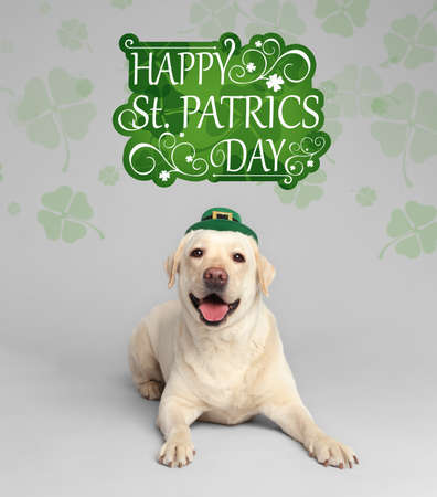 Labrador retriever with leprechaun hat on light grey background. St. Patrick's day Imagens