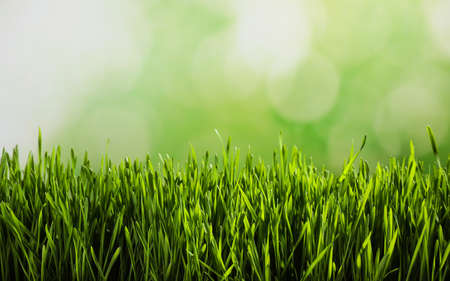 Fresh spring grass on blurred background, space for text Foto de archivo