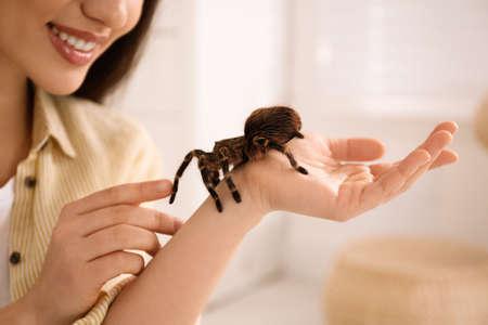 Woman holding striped knee tarantula at home, closeup. Exotic pet