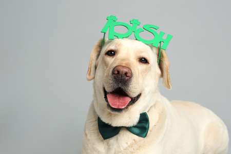 Labrador retriever with Irish party glasses and bow tie on light grey background. St. Patrick's day
