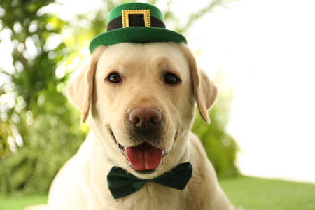 Labrador retriever with leprechaun hat and bow tie outdoors, closeup. St. Patrick's day