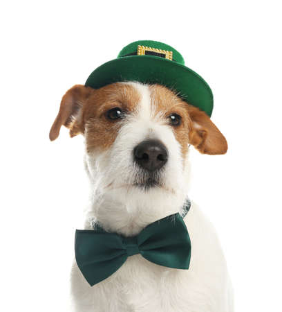 Jack Russell terrier with leprechaun hat and bow tie on white background. St. Patrick's Day