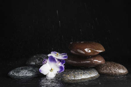 Stones and flowers in water on black background, space for text. Zen lifestyle