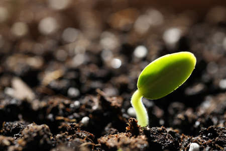 Little green seedling growing in soil, closeup. Space for text Stockfoto