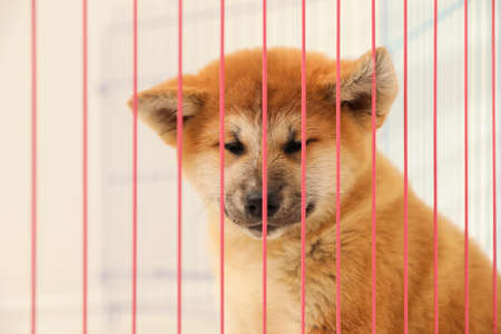 Cute Akita Inu puppy in cage on light background. Baby animal