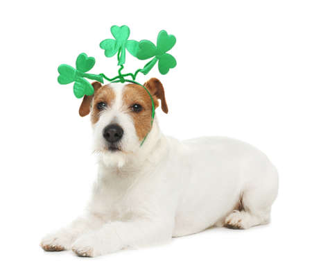 Jack Russell terrier with clover leaves headband on white background. St. Patrick's Day